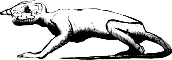 El vagabundo de la muerte (por x.pibernat)